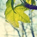 nature-sun-plant-leaf
